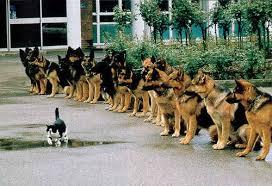 garde de chien paris